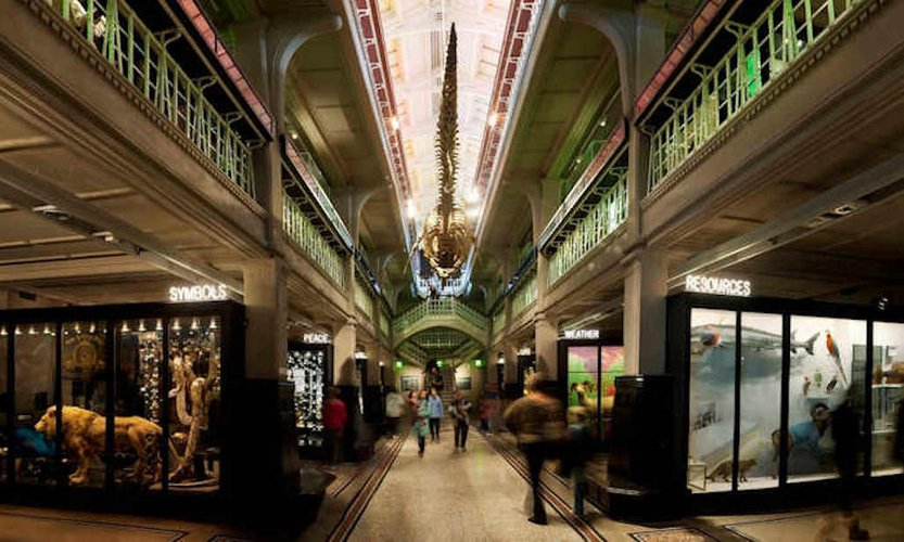 Manchester Museum - Living world with visitors